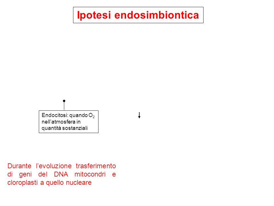 Ipotesi endosimbiontica