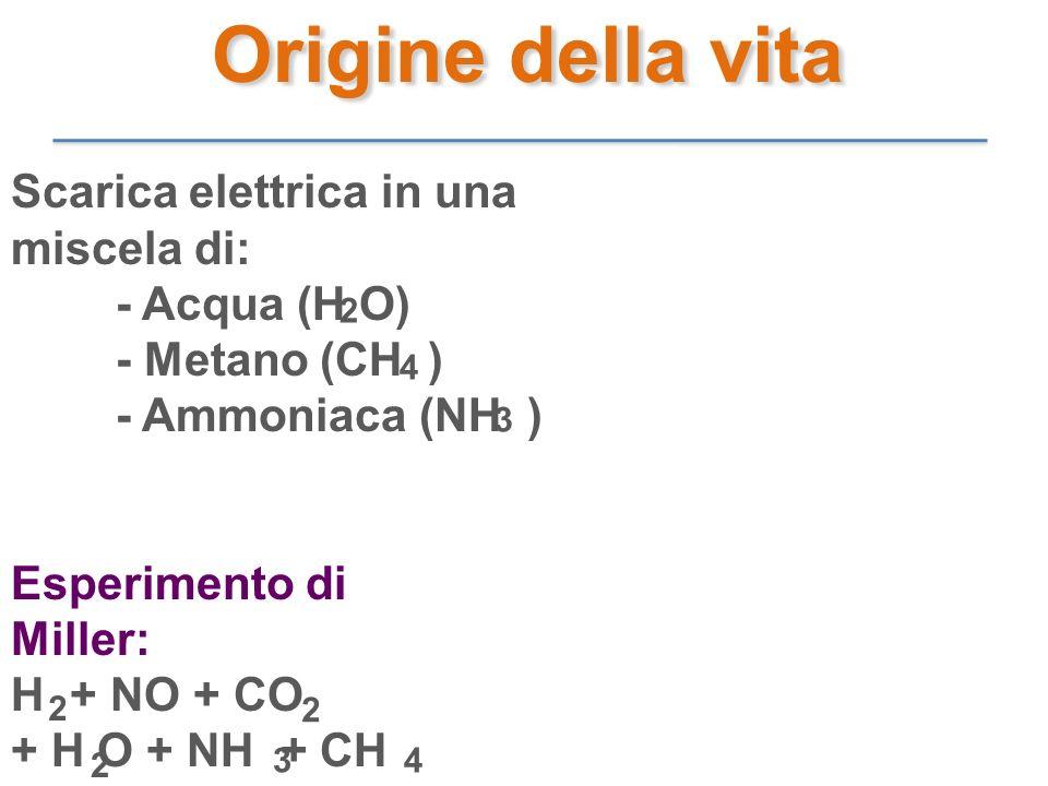 Origine della vita Scarica elettrica in una miscela di: - Acqua (H O)