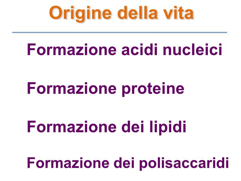 Origine della vita Formazione proteine Formazione dei lipidi
