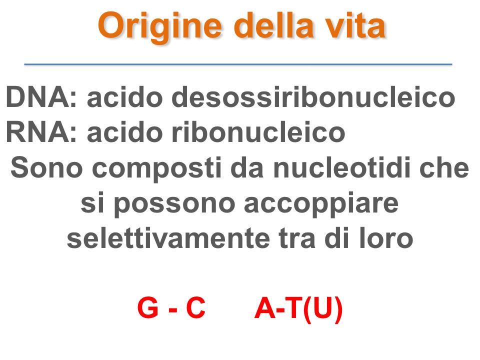 Origine della vita DNA: acido desossiribonucleico