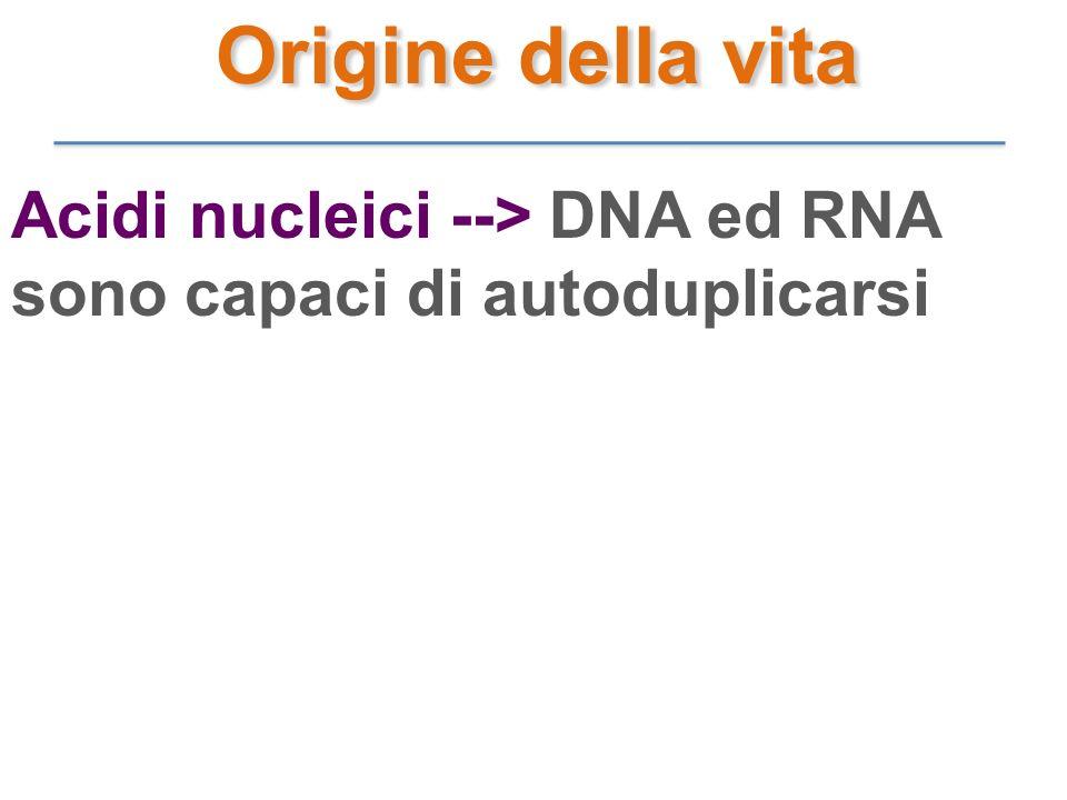 Origine della vita Acidi nucleici --> DNA ed RNA sono capaci di autoduplicarsi