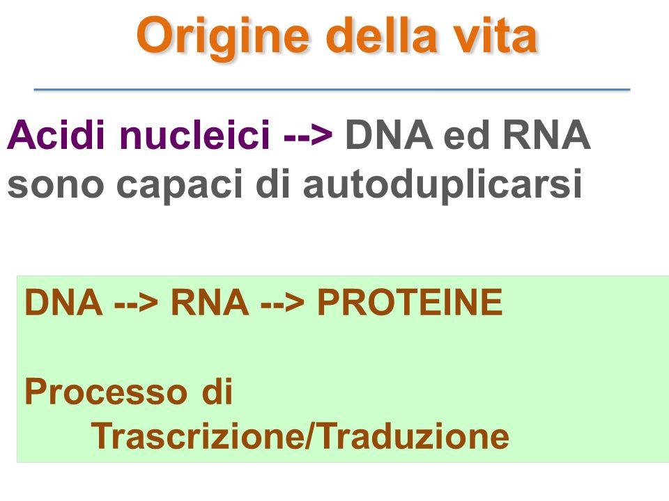 Origine della vita Acidi nucleici --> DNA ed RNA sono capaci di autoduplicarsi. DNA --> RNA --> PROTEINE.