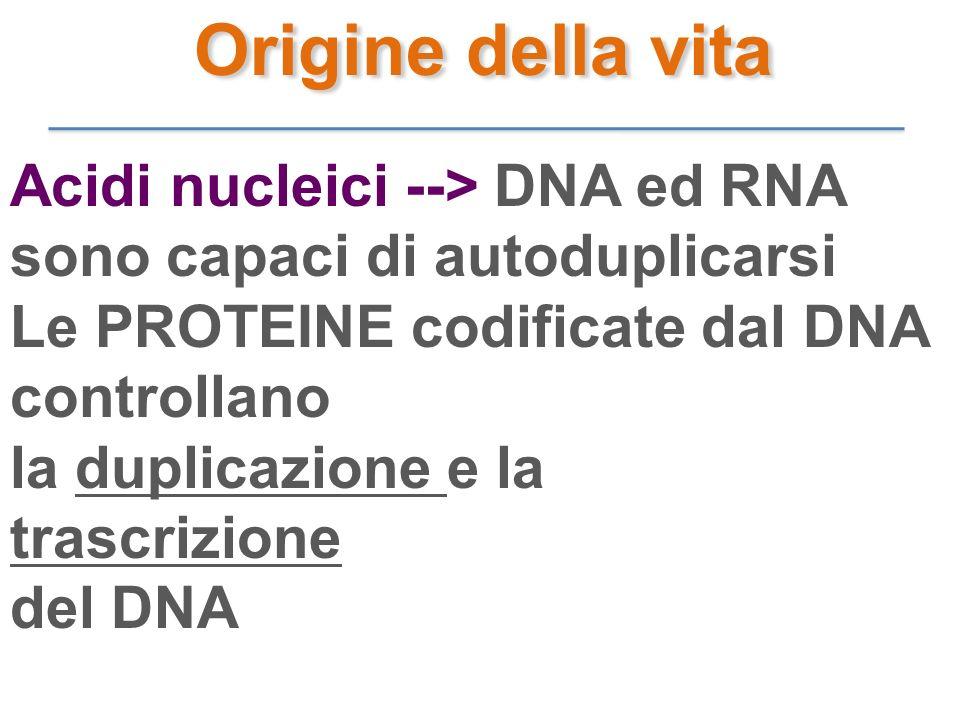 Origine della vita Acidi nucleici --> DNA ed RNA sono capaci di autoduplicarsi. Le PROTEINE codificate dal DNA.