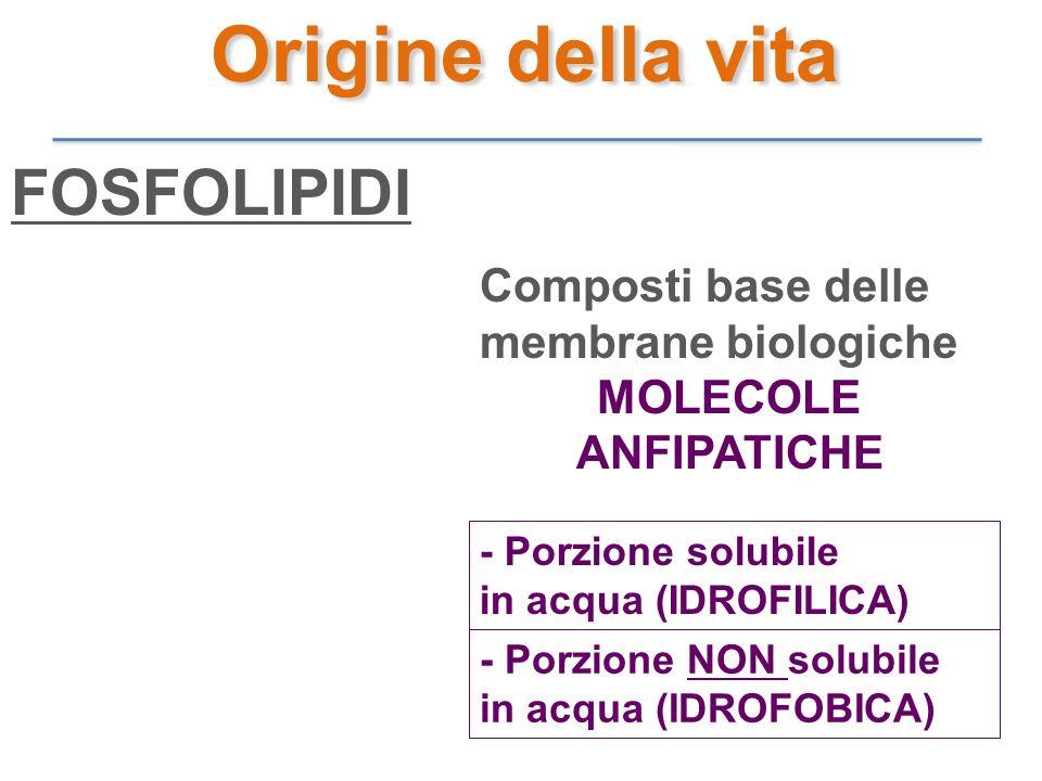 Origine della vita FOSFOLIPIDI Composti base delle membrane biologiche