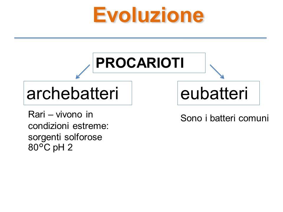 Evoluzione archebatteri eubatteri PROCARIOTI