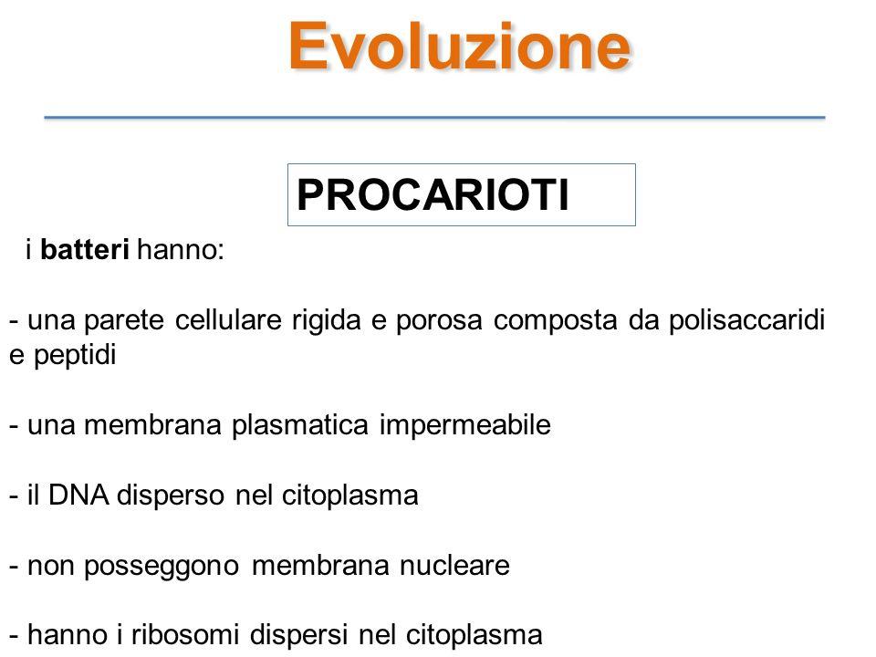 Evoluzione PROCARIOTI i batteri hanno: