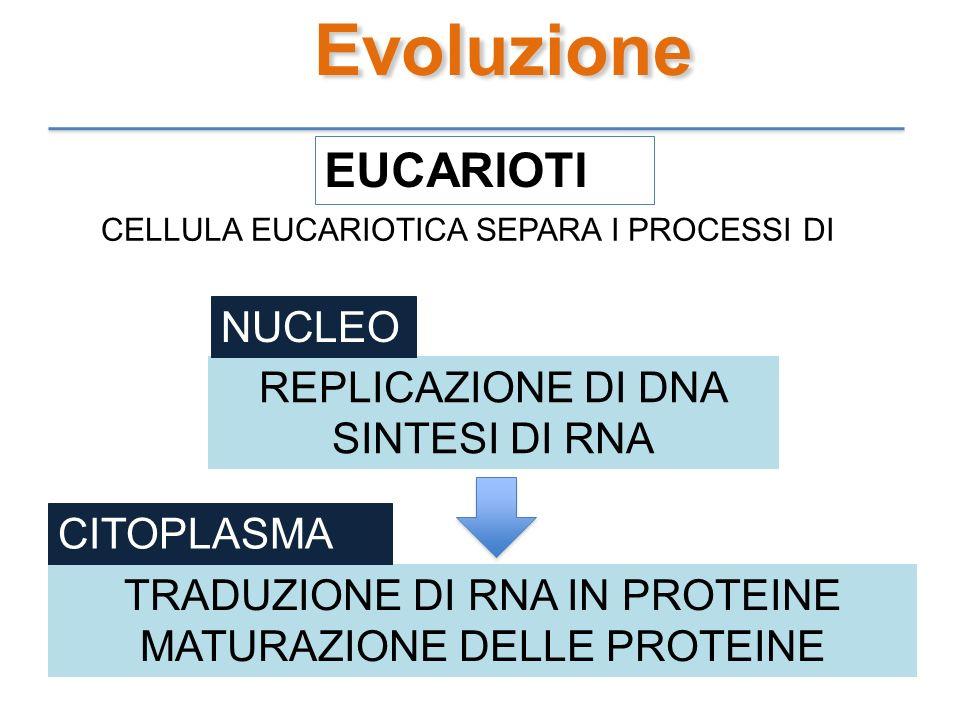 Evoluzione EUCARIOTI NUCLEO REPLICAZIONE DI DNA SINTESI DI RNA
