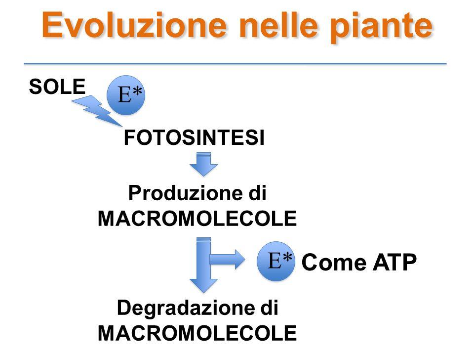Evoluzione nelle piante