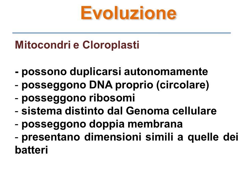 Evoluzione Mitocondri e Cloroplasti - possono duplicarsi autonomamente