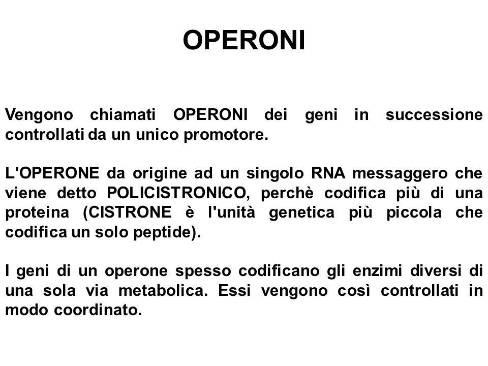 OPERONI Vengono chiamati OPERONI dei geni in successione controllati da un unico promotore.