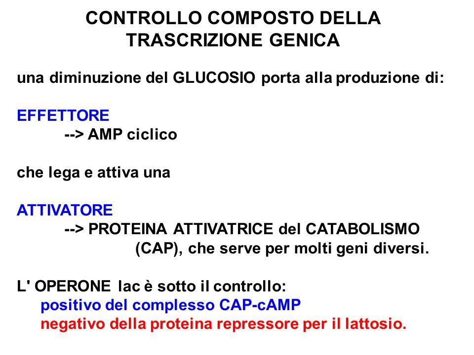 CONTROLLO COMPOSTO DELLA