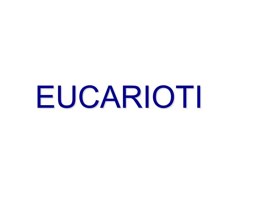 EUCARIOTI