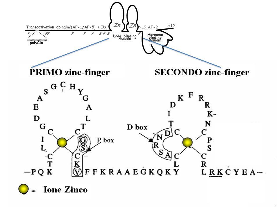 Zn H12 Transactivation domain/(AF-1/AF-5) \ ID NLS AF-2