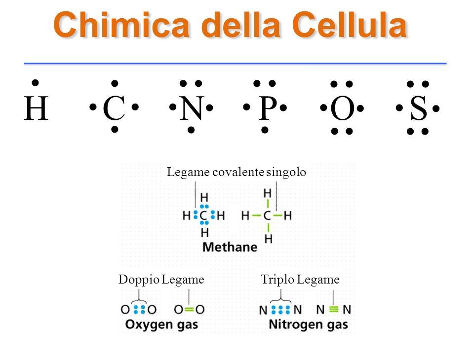 Chimica della Cellula. . . . . . . . . . . . . . . . . . . . H C N P O S. .