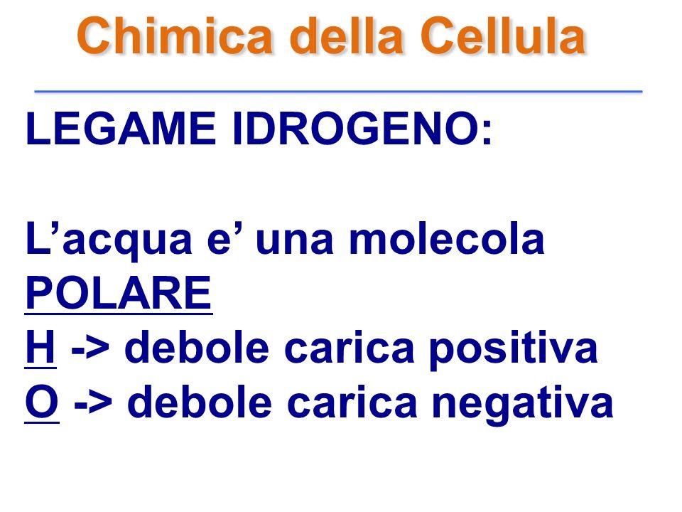 Chimica della Cellula LEGAME IDROGENO: L'acqua e' una molecola POLARE