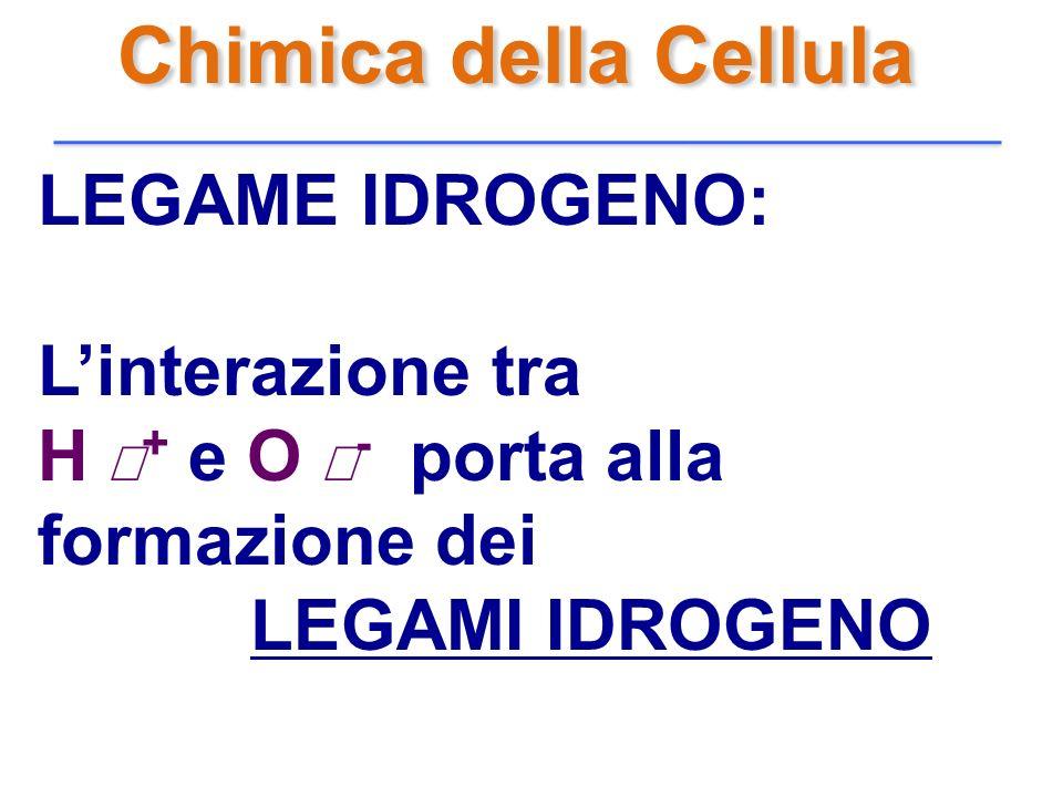 Chimica della Cellula LEGAME IDROGENO: L'interazione tra
