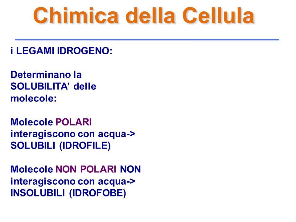 Chimica della Cellula i LEGAMI IDROGENO: