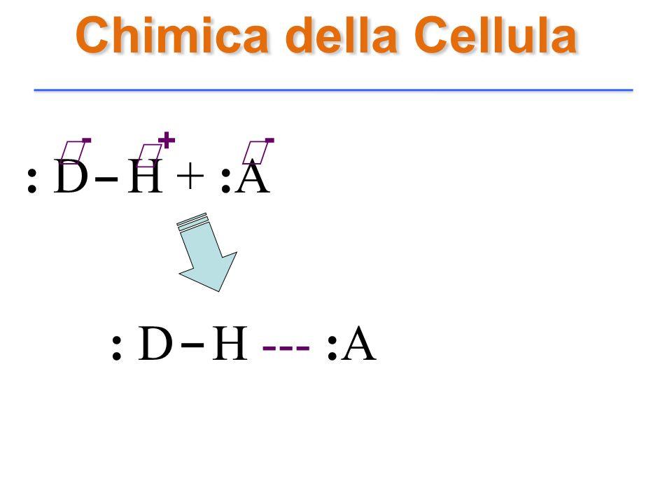 Chimica della Cellula δ- δ+ δ- : D H + :A : D H --- :A