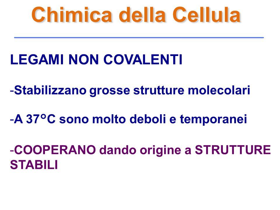 Chimica della Cellula LEGAMI NON COVALENTI