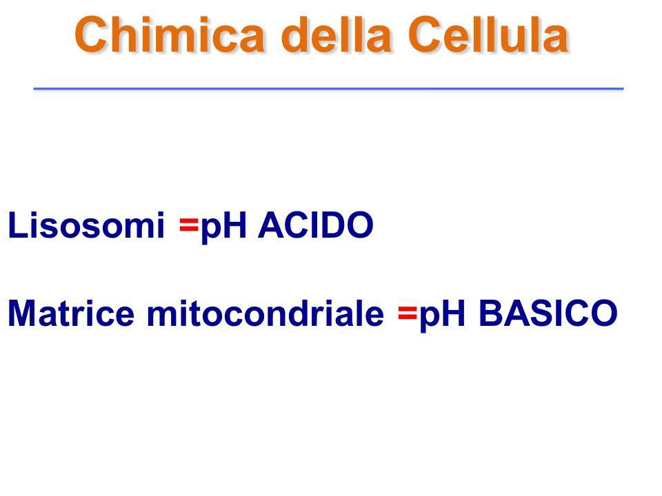 Chimica della Cellula Lisosomi =pH ACIDO