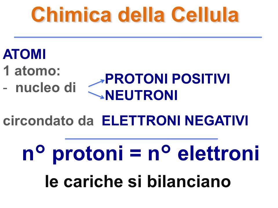n° protoni = n° elettroni le cariche si bilanciano
