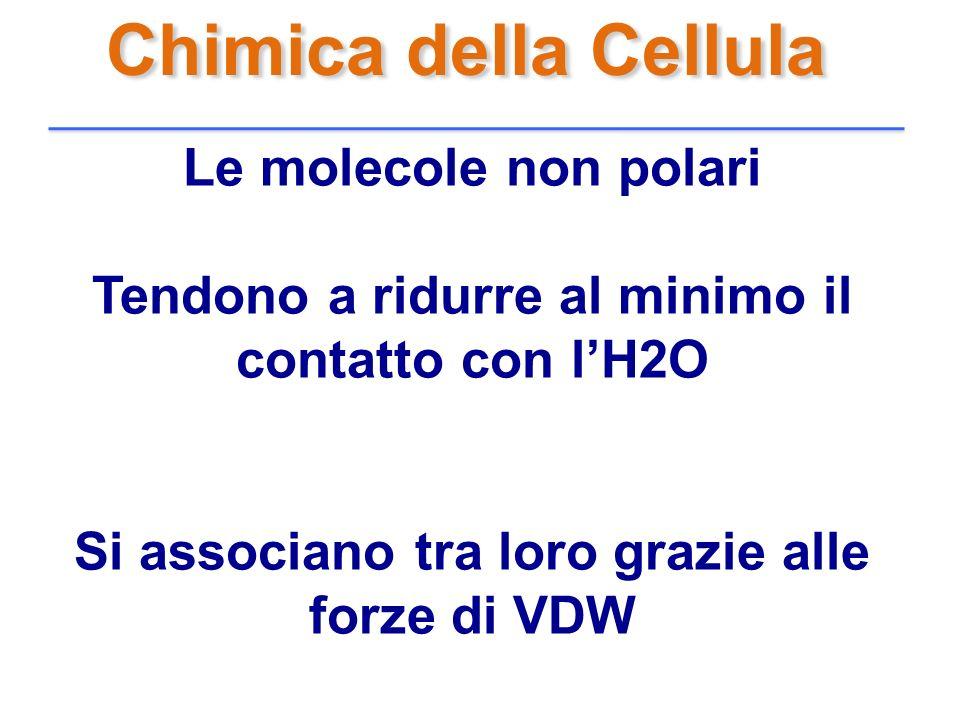 Chimica della Cellula Le molecole non polari