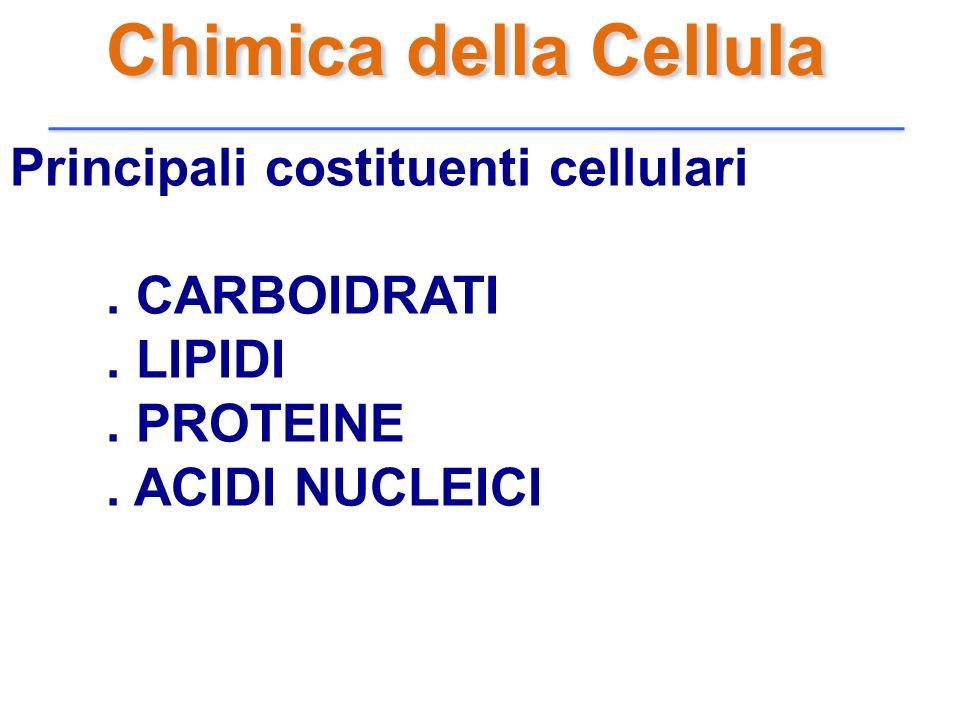 Chimica della Cellula Principali costituenti cellulari . CARBOIDRATI