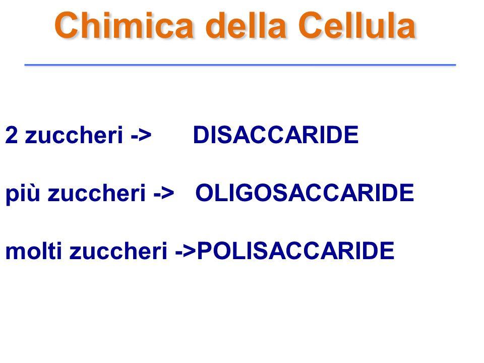 Chimica della Cellula 2 zuccheri -> DISACCARIDE