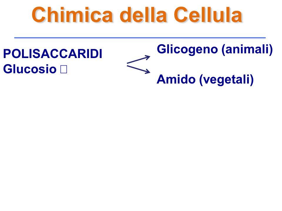 Chimica della Cellula Glicogeno (animali) POLISACCARIDI Glucosio α