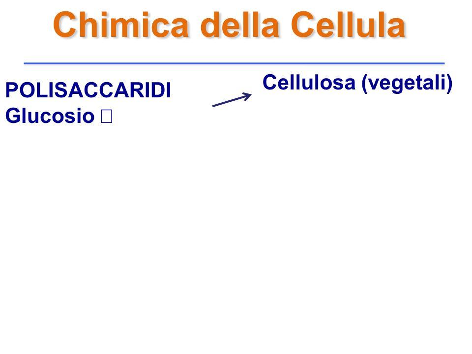 Chimica della Cellula Cellulosa (vegetali) POLISACCARIDI Glucosio β