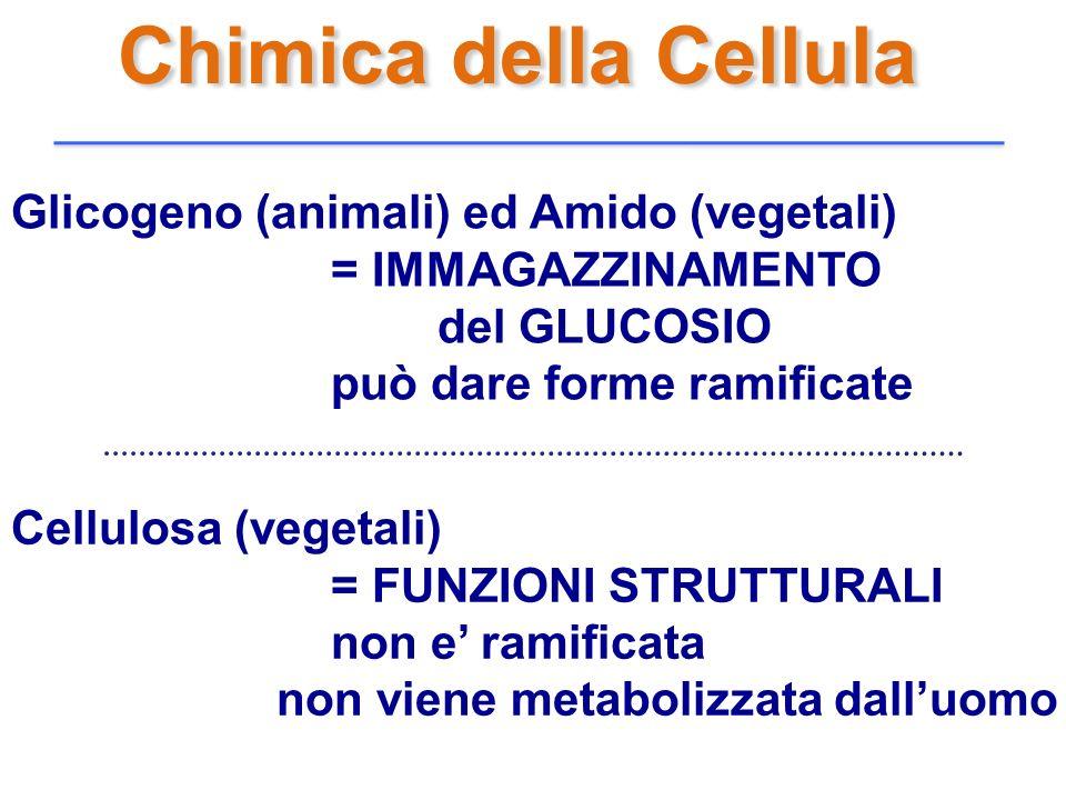 Chimica della Cellula Glicogeno (animali) ed Amido (vegetali)
