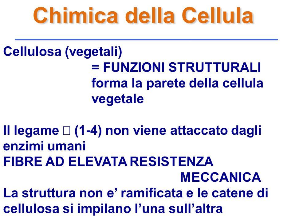 Chimica della Cellula Cellulosa (vegetali) = FUNZIONI STRUTTURALI