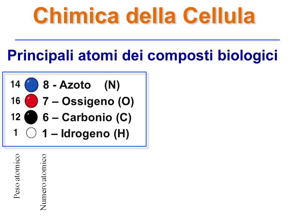Chimica della Cellula Principali atomi dei composti biologici