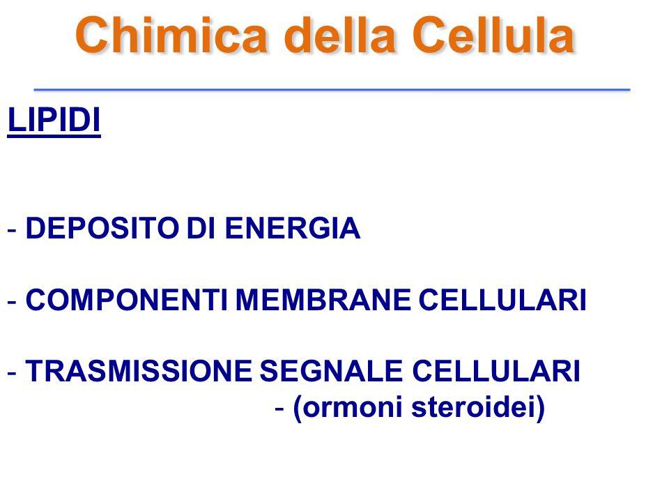Chimica della Cellula LIPIDI DEPOSITO DI ENERGIA