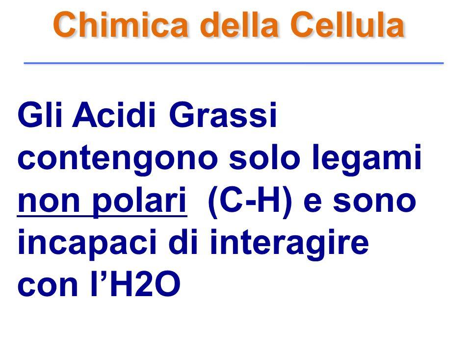 Chimica della Cellula Gli Acidi Grassi contengono solo legami non polari (C-H) e sono incapaci di interagire con l'H2O.