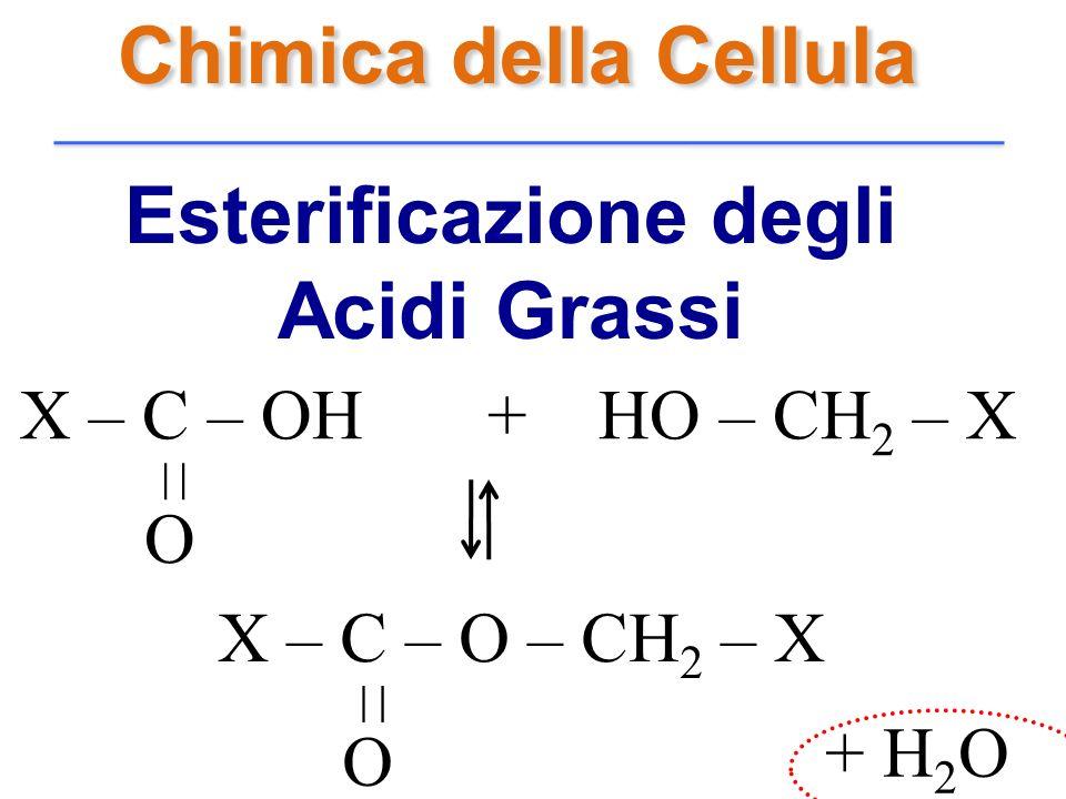 Esterificazione degli Acidi Grassi