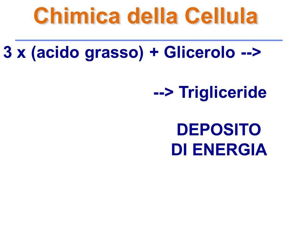 Chimica della Cellula 3 x (acido grasso) + Glicerolo -->