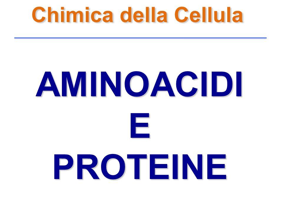 Chimica della Cellula AMINOACIDI E PROTEINE