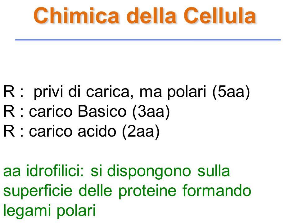Chimica della Cellula R : privi di carica, ma polari (5aa)