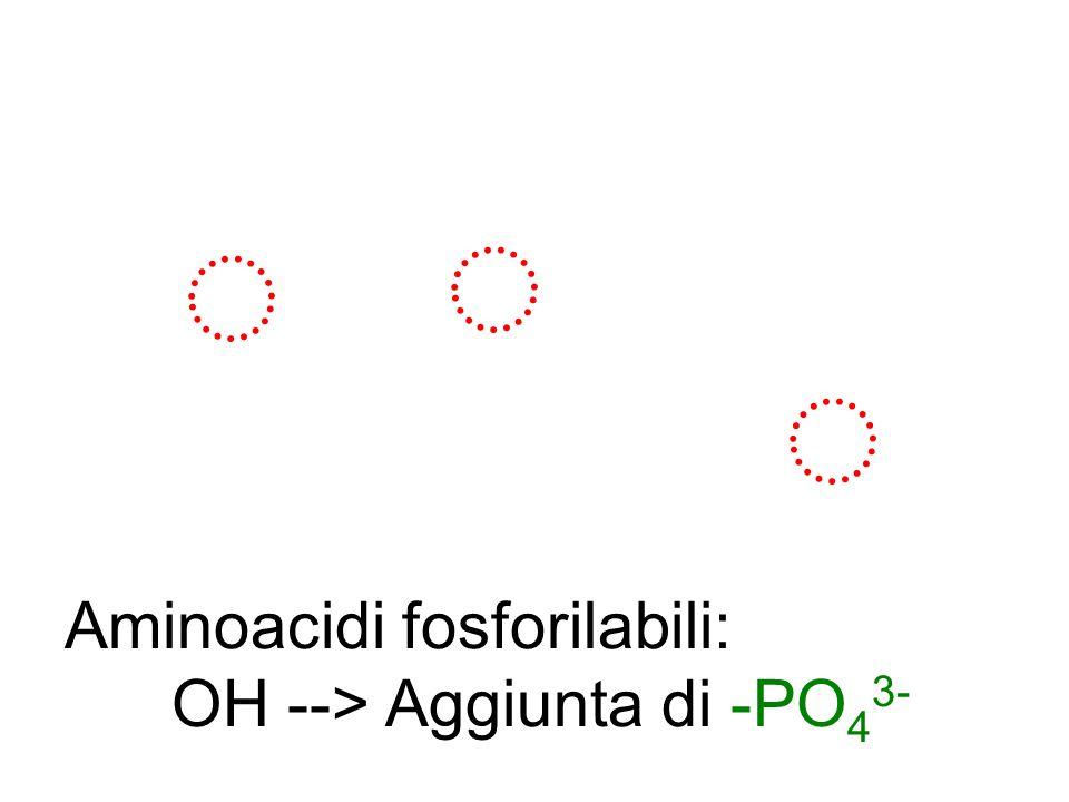 Aminoacidi fosforilabili:
