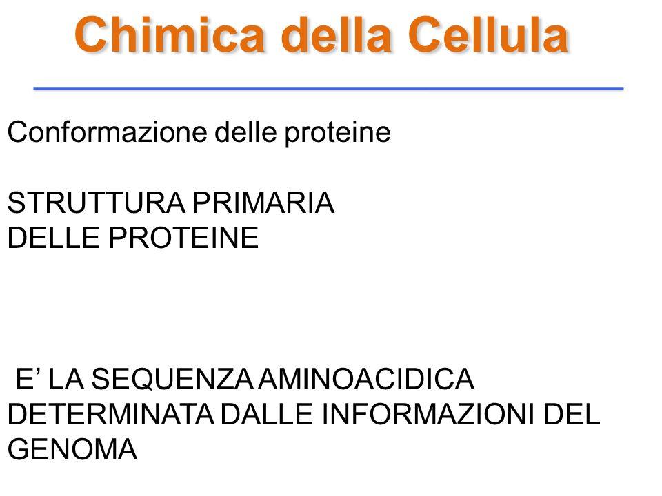 Chimica della Cellula Conformazione delle proteine STRUTTURA PRIMARIA