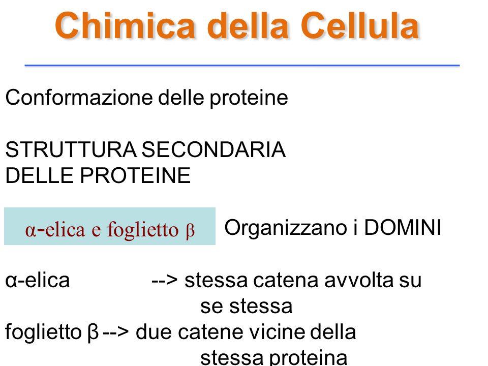 Chimica della Cellula Conformazione delle proteine