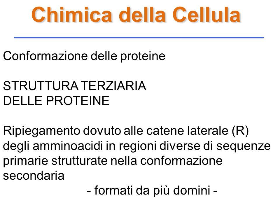 Chimica della Cellula Conformazione delle proteine STRUTTURA TERZIARIA