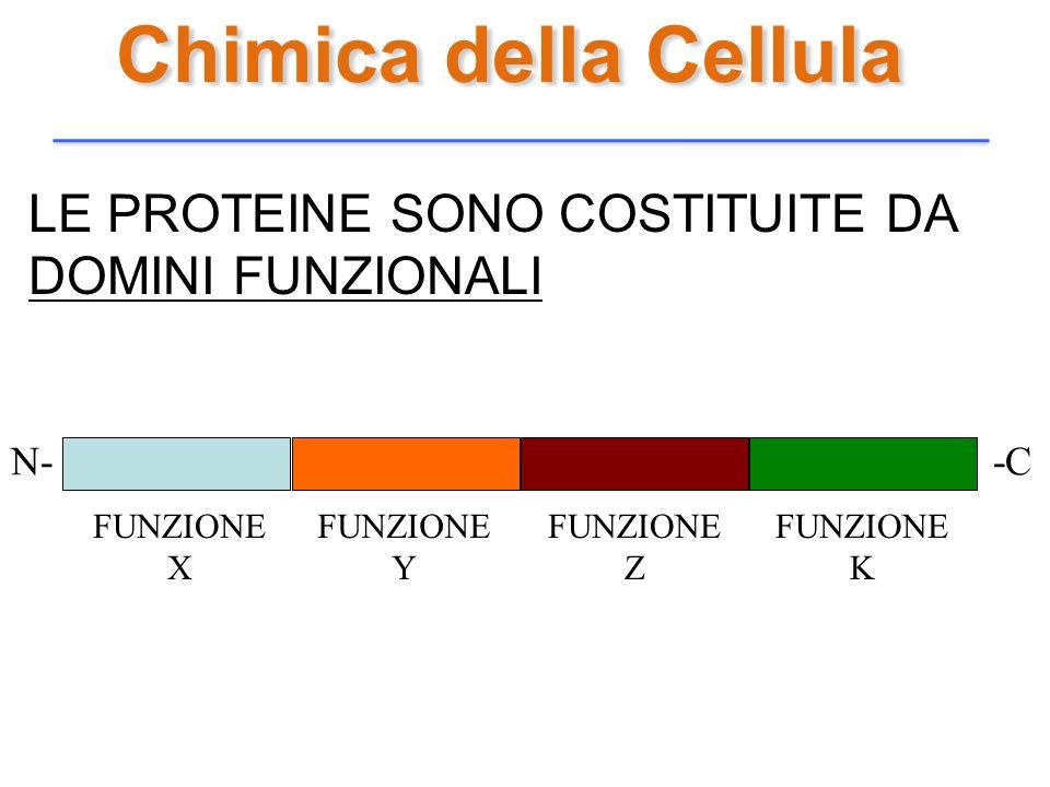 Chimica della Cellula LE PROTEINE SONO COSTITUITE DA DOMINI FUNZIONALI