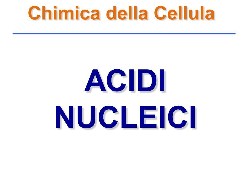 Chimica della Cellula ACIDI NUCLEICI