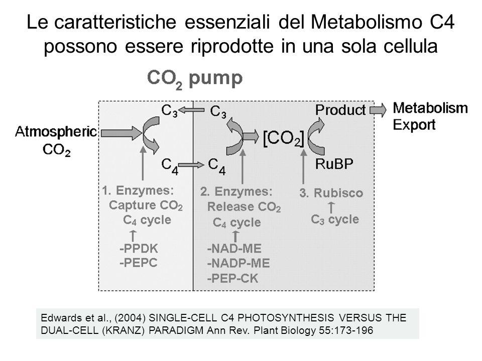 Le caratteristiche essenziali del Metabolismo C4 possono essere riprodotte in una sola cellula
