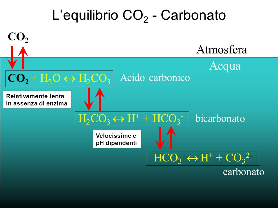 L'equilibrio CO2 - Carbonato