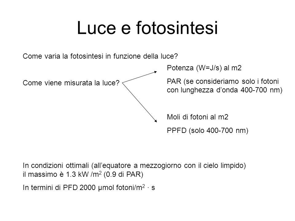 Luce e fotosintesi Come varia la fotosintesi in funzione della luce