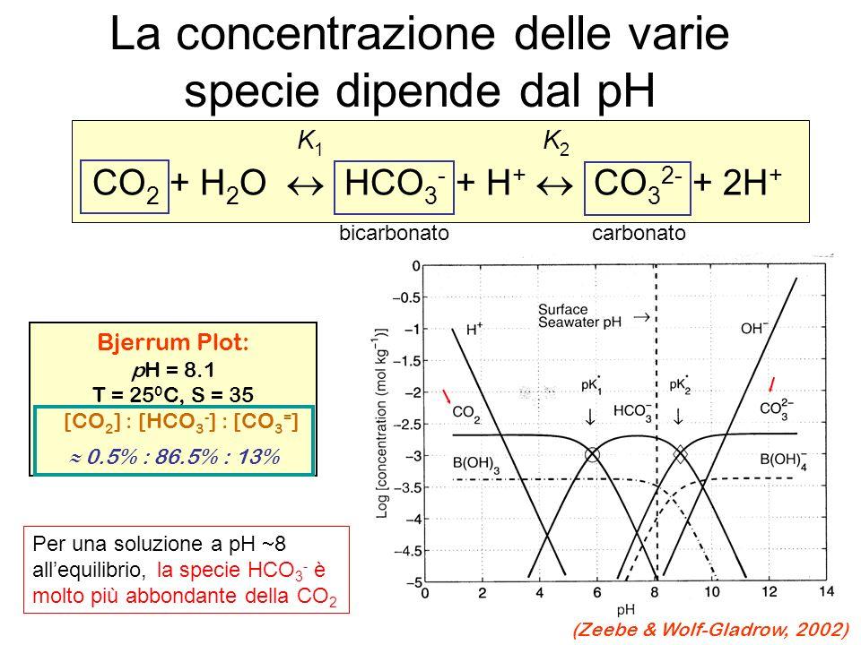 La concentrazione delle varie specie dipende dal pH