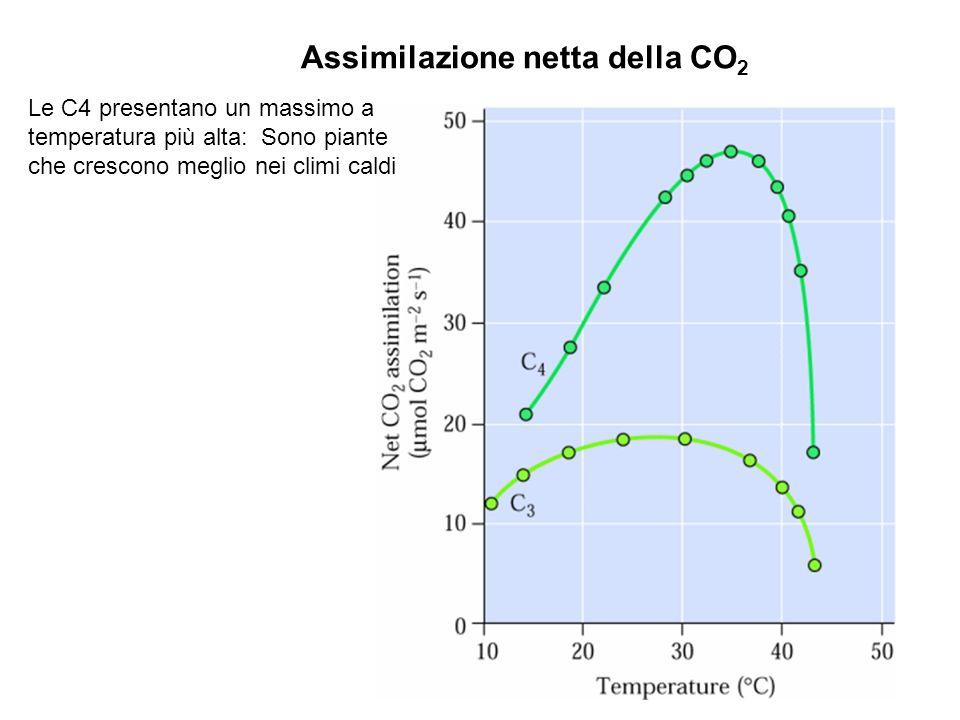 Assimilazione netta della CO2